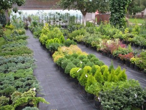 Augalų pardavimo aikštelė